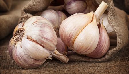 Potted Garlic